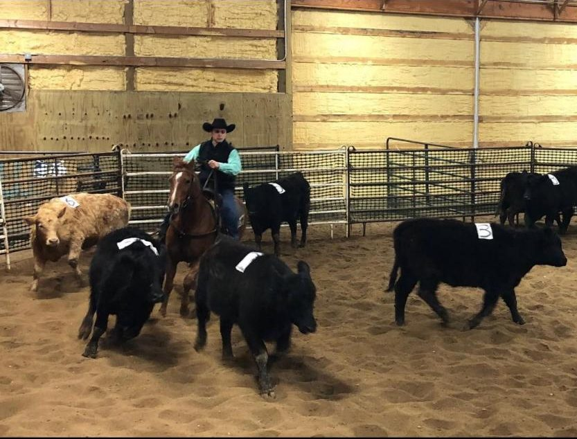 Chance+Karnes+%2810%29+moves+the+cattle+around+during+a+sorting+event.+