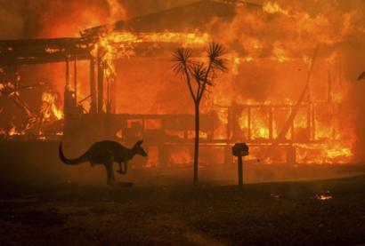 As the fires continue to burn in Australia, animals flee their natural habitat looking for safety.